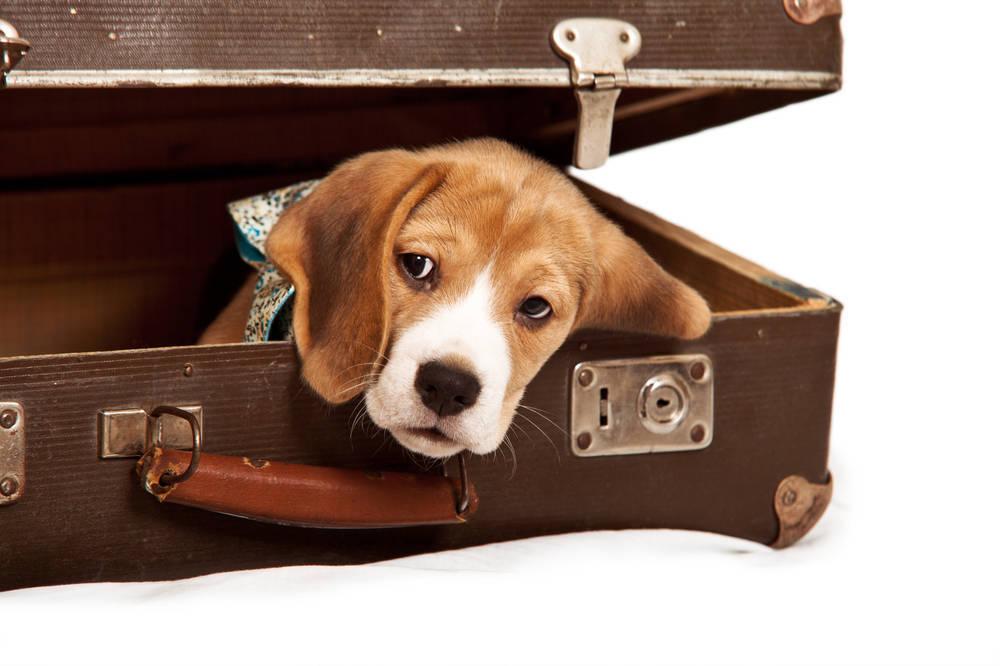 Ideas para viajar con animales